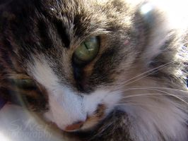 Feline Face by SilverAgPhotography