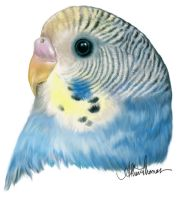 A Budgie for Speckledrose by AthenaTT