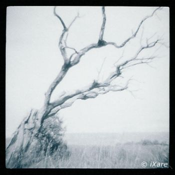 And also a tree... by iXare