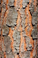 Stone Pine Bark Texture Stock by aegiandyad