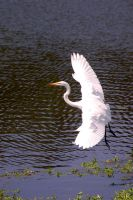egret approach by photom17