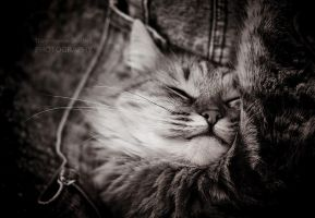 Sleepy Kitty by StacyD