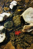 Fall Flower In The River by justinaversano