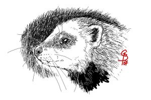 Ferret portrait by KitsuneBara