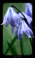 Little Blues by PhotoFreak111