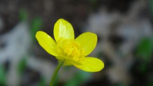 Buttercup by adderx99