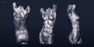 Anatomy 2013 - Female Torso by CoffeeAndMarkers