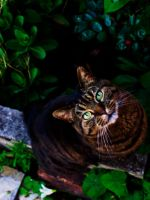 Emerald eyes two by The-Human-Abstract91