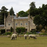 Rhinos on the Lawn.. by quaddie