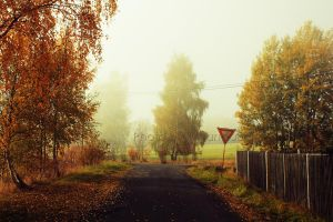 Autumn Road by AmandaBlack