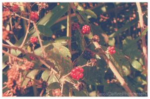 Red and black berries by FrancescaDelfino