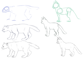 Cat anatomy by TigerChic