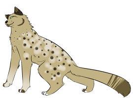 cat adoptable (sold) by Spottedfire23