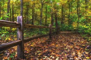 Forest Fence by toddcarter