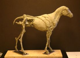 Horse Ecorche - Day 8 by aerie-