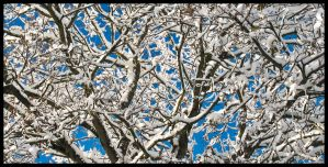 Blue and White by sags