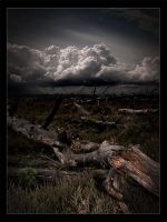 Tree graveyard... by MOSREDNA
