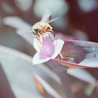 bee by DianaGentili