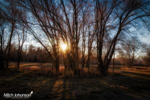The Sun Through the Trees by mjohanson