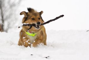 Cherie Playing in the Snow by netrex