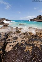 Cockroach Cove: Oahu by Mgbedt420