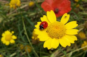 coccinelle by bdbus