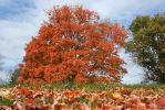 Fall 2014 3 by JewelsStock
