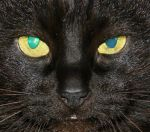 Black Cats Eyes by Jenvanw