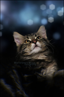 .: Dream of a Kitty :. by WhiteSpiritWolf
