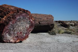 Petrified Forest by worldtravel04