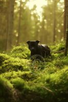 Forest Prowler by Camera-head