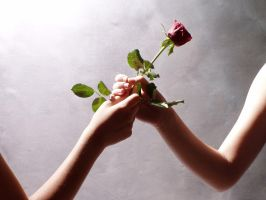 Your rose is in bloom. by Tailless