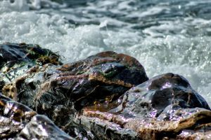 Wet rocks by forgottenson1
