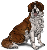 Saint Bernard by Riixon
