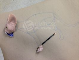 New Sphynx Pattern Making by LimitlessEndeavours