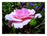 Pink Flower by Ailith