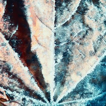 Frozen Leaf by AljoschaThielen