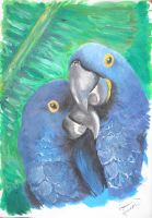 hyacinth macaws by Gyya