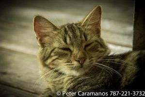Cat with 28-85mm Vintage FD lens by Caramanos2000
