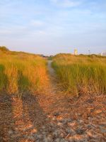 Reeds 2 by Renstock