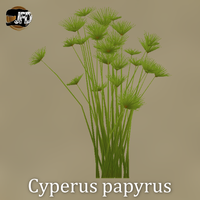 Papyrus Sedge by IbenTesara