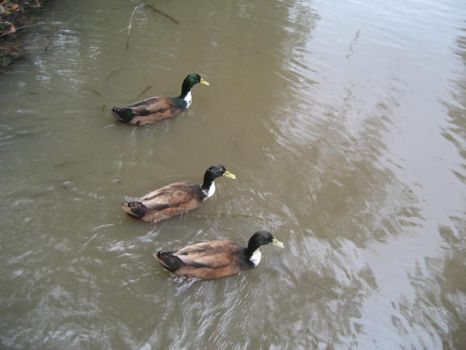3 QUACKERS by talespin