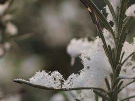 Snow crystals III by pagan-live-style