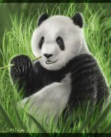 The great panda by Seanica