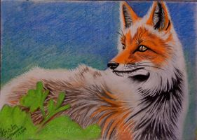 Fox, pastel by kristinloft