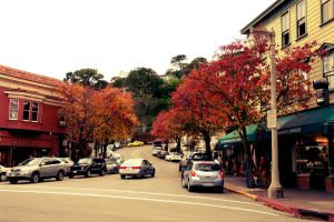 Fall Leave in Sausalito by Moose-Art