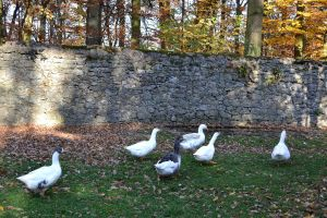 Gooses by Roky320