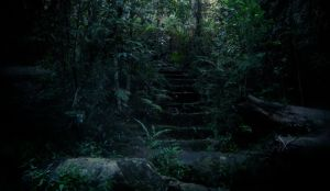 Fairy Steps by ShatteredPhotography