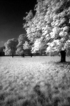 bw infrared experiment no2 by Tomek-AT