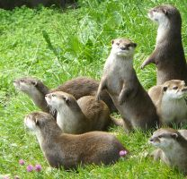 Otters by Anders429